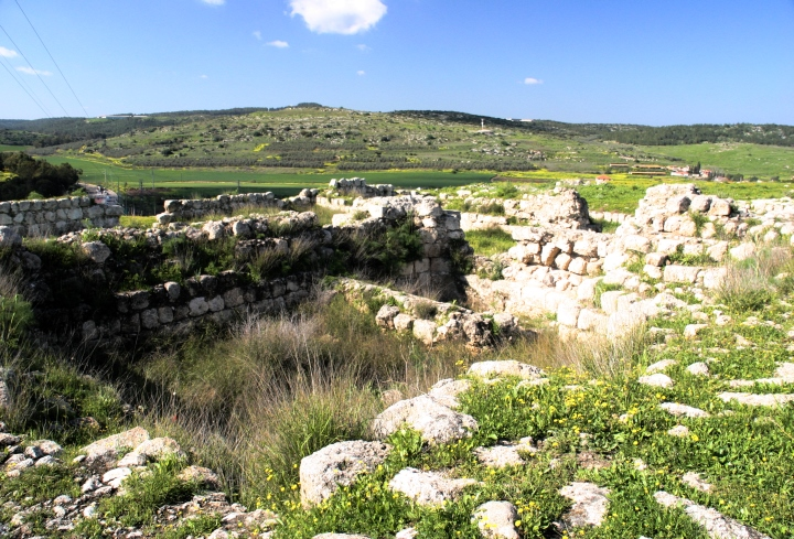 Field Of Joshua Of Beth Shemesh: Lion Tracks Photo QnA -- Beth Shemesh In Judea. The Ark